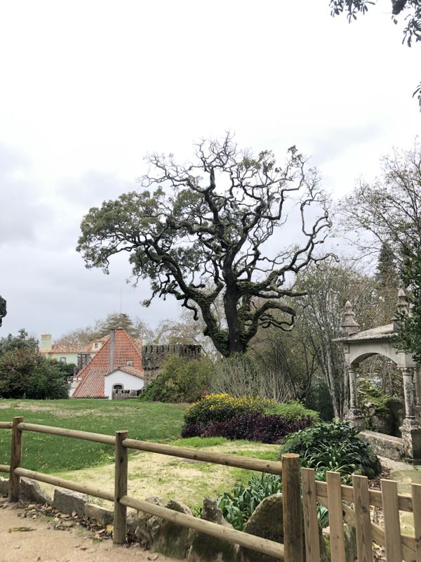Дерево в Синтре